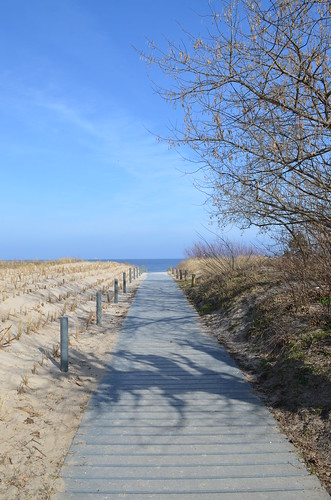 Ahlbeck beach Germany_plank path with trees and sea grass