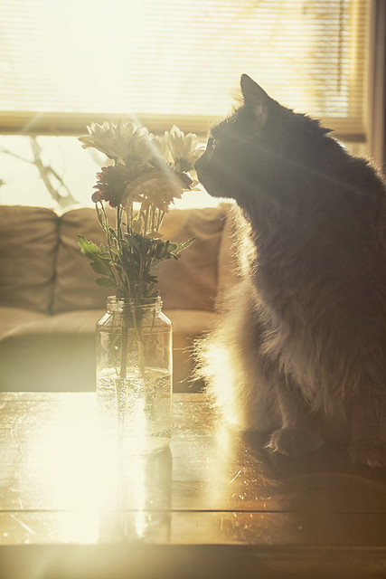 Smelling the Flowers
