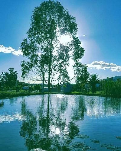 Jardim Botânico de Sorocaba. Um lindo lugar. Botanic Garden. #jardim #jardimbotanico #botanical #botanicgarden