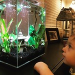 Archer's new fishy friends! Thank you grandma and grandpa! 🐟🐠 by bartlewife