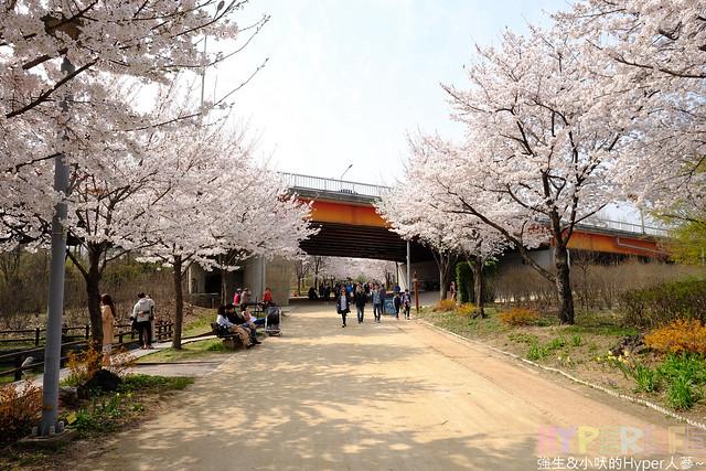 首爾林seoul forest (37)