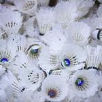 Peps_Badminton_20141115_HubertGaudreau_0009