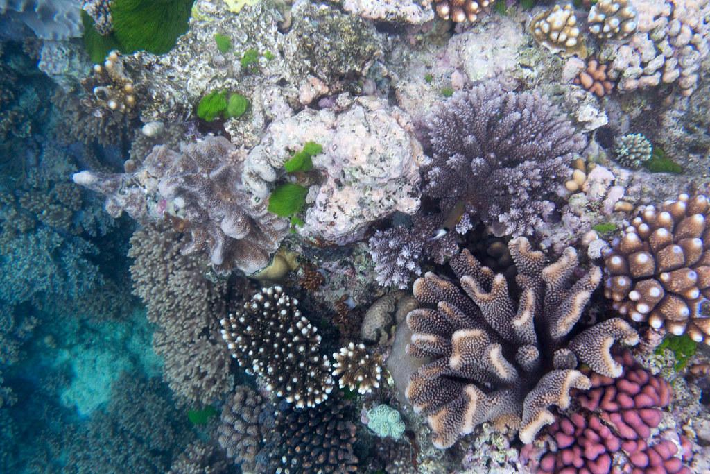 Great Barrier Reef-4461.jpg