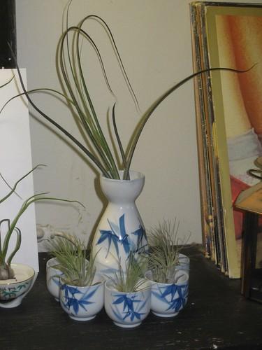 airplant butzi sake