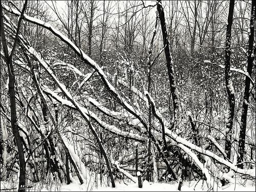 trees winter blackandwhite bw snow nature contrast unitedstates michigan rich grandrapids bnw iphone tatum blogrodent richtatum iphoneography