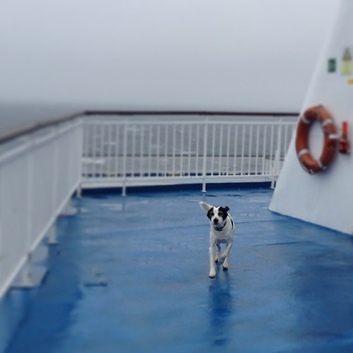 All paws on deck... #rockyroadtrip