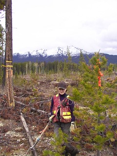 Forestry Survey