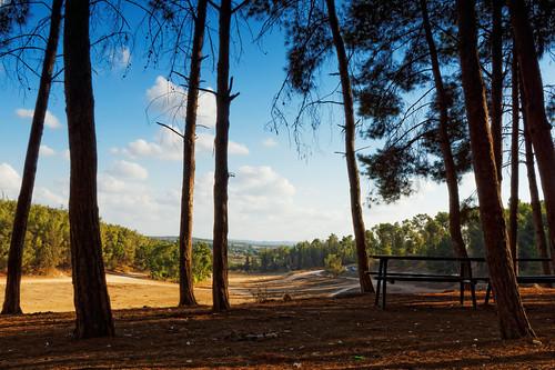 green clouds forest day cloudy sony hitech benshemen benshemenforest minolta2485mm sonya77 mygearandme