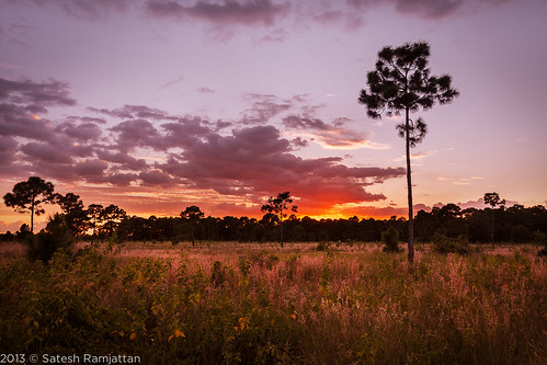sunset tree clouds landscape florida deadtree goldenhour satesh peaceinart miramarpinelands