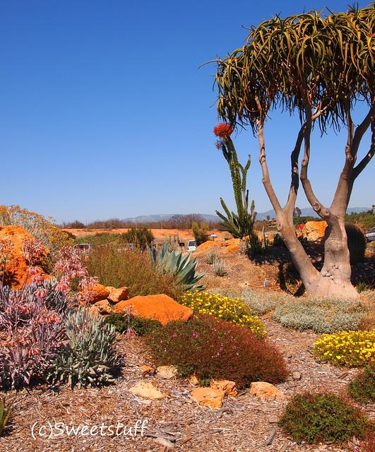 Waterwise Botanicals