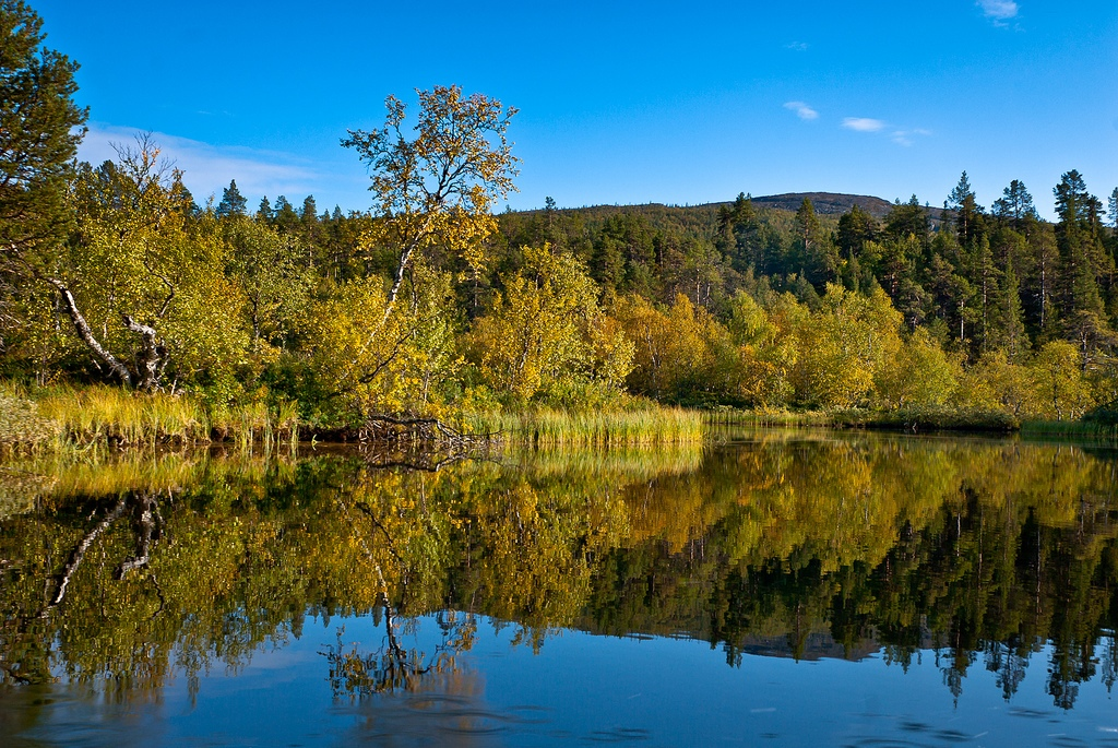 17. Bosque y lago, en el parque natural de Lemmenjoki, Finlandia. Autor, Mikko kuhna