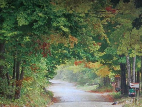 park autumn trees nature leaves canon season thegalaxy chanelchat vigilantphotographersunite vpu2 vpu3 vpu4 vpu5 vpu6 vpu7 vpu8 vpu9 vpu10 leaveschangecolours