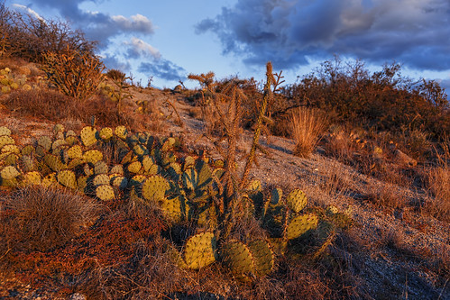cactus newmexico clouds cacti landscape desert albuquerque fourhills