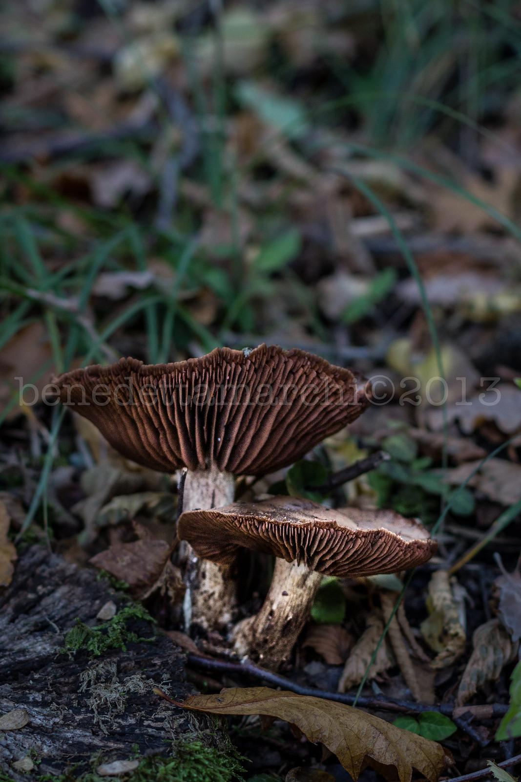 A passeggiar per funghi...