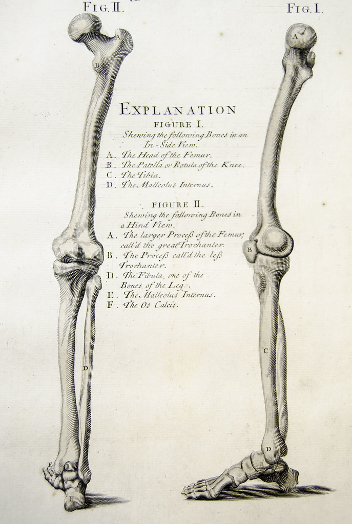 Bones Of The Leg Plate 8 Showing Engraving Of The Bones Of Flickr