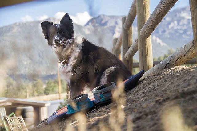 Estes Park Dog Friendly Cabins