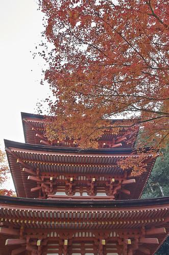 【写真】2013 紅葉 : 浄瑠璃寺/2019-08-22/IMGP3554