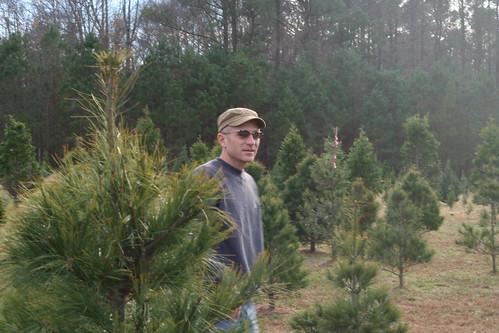 Tree2013 (21)