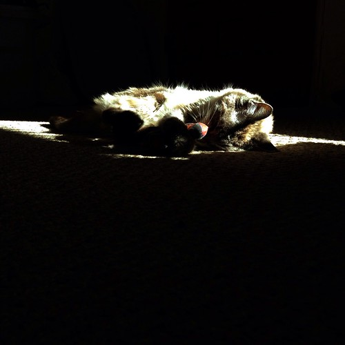 No matter how tiny the patch of sun, she will claim it
