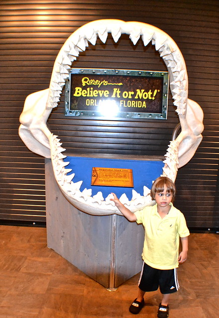 Ripley's Believe It or Not Orlando - largest shark jaw