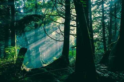 Hoh Rain Forest, Forks, Washington