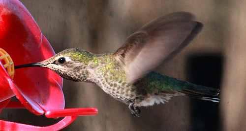 143993-1.jpg by Robert W Gilcrease