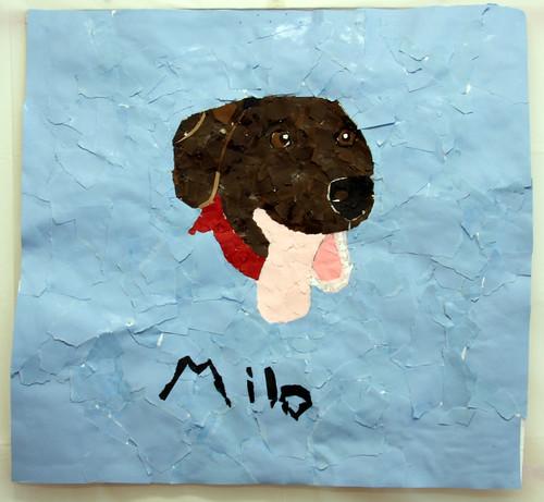 Milo German Shepherd/Labrador Retriever, #No 973