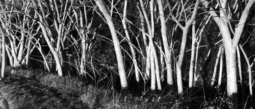 trees sunset outdoors blackwhite
