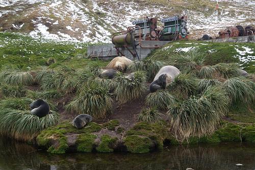 434 Zeeberen en zeeolifanten