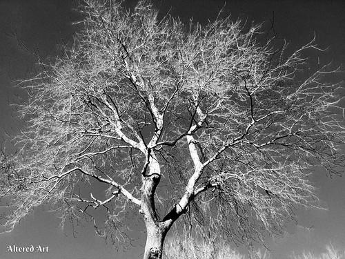 tree skies nature scenic scenery sky delmarvapeninsula delaware trees color sunsets monochrome blackandwhitephotos blackandwhite silhoutte barebranches treebranches delmarva