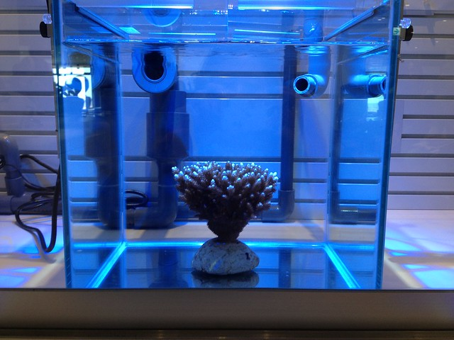 Photo:Aquarium Coral Display By OIST (Okinawa Institute of Science and Technology)