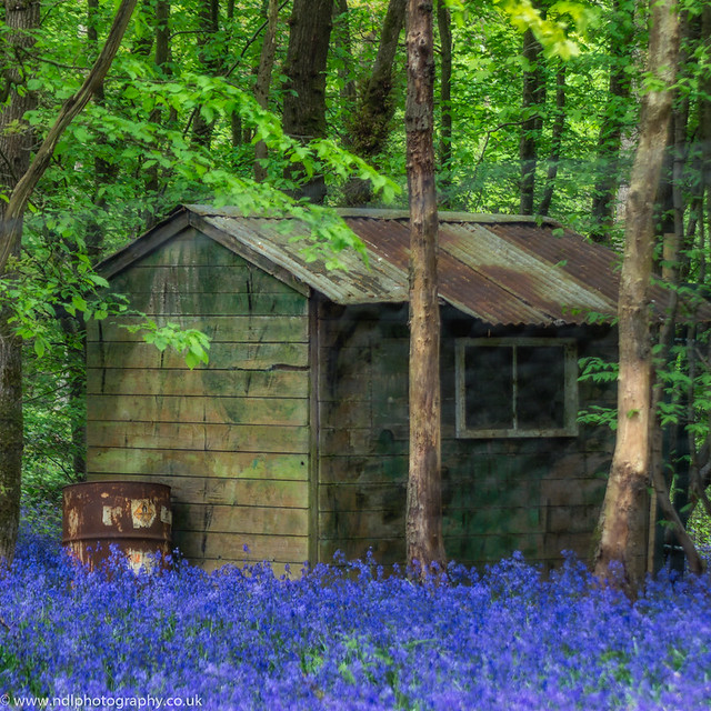 The Cabin in Bluebell Wood.