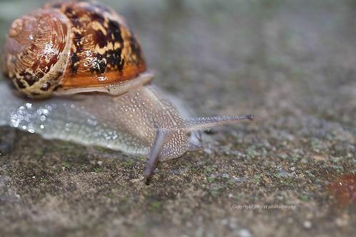 detail macro photographie snail animaux escargot coquille corne natureetpaysages artetculture
