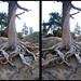 Dead Tree 3D by bigvern