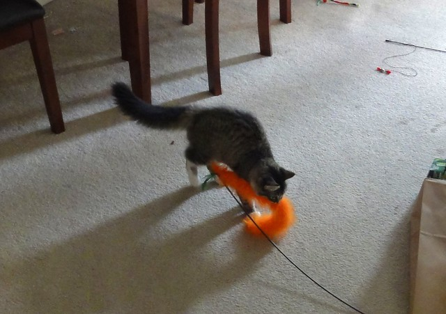 Luna pushing her orange-feather-toy-onna-stick.