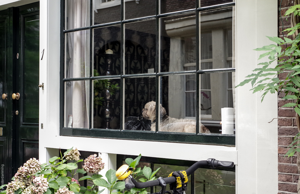Amsterdam, Dog at the Window