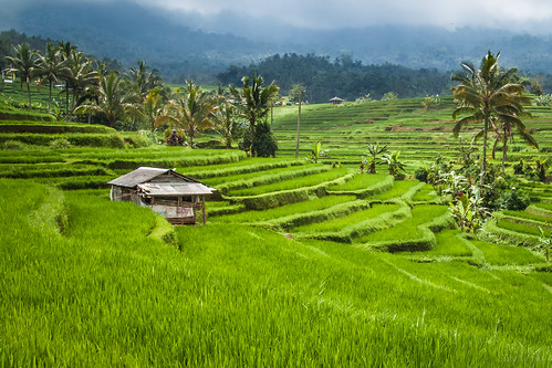 The Jatiluwah Rice Terraces - Unesco's World Heritage Site, Bali, Indonesia