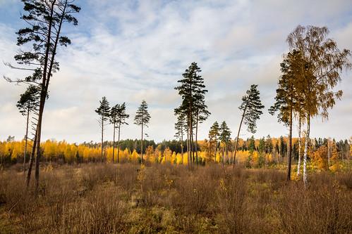 autumn rudens izcirtums