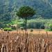 14-tree-DSC_3582