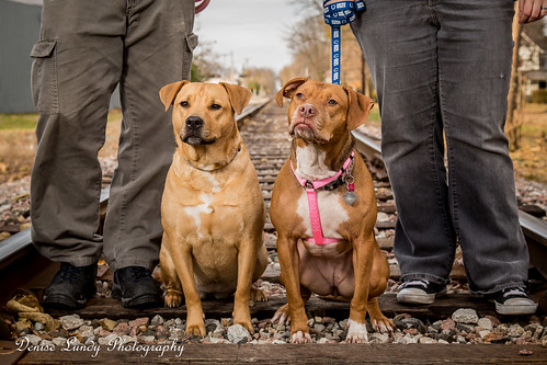 Doggies on the Tracks