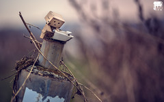sixteenth day of danbo - up and down the rabbit hole