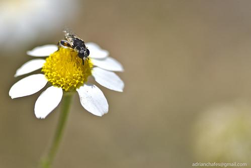 Margarida amb vespa by Adrià Chafes