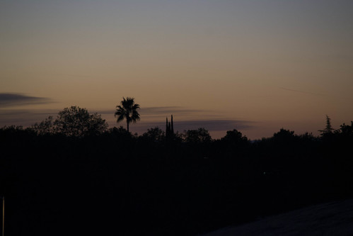 california sunrise unitedstates palmtree redding lassen
