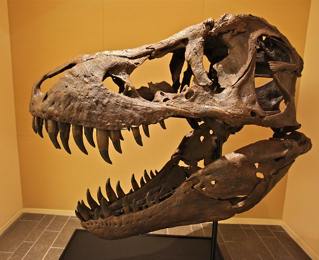 Look Up A Number >> The biggest and most complete male T-Rex ever found ...