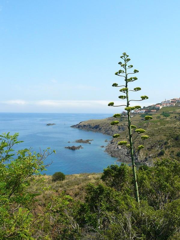 vue sur l'anse de Terrimbo et le Cap Canadells