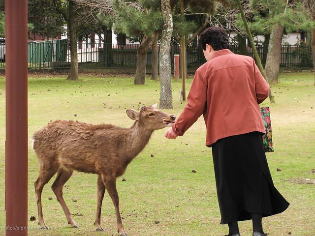 Jap�n - Nara