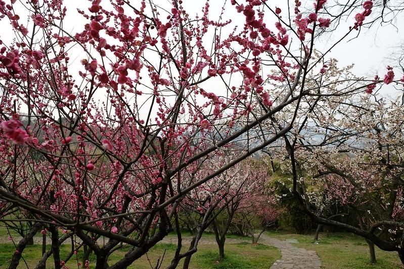 Meiyuan garden(Camera:Fujifilm X-E1+Fujinon XF18-55mm/f2.8-4 R LM OIS)