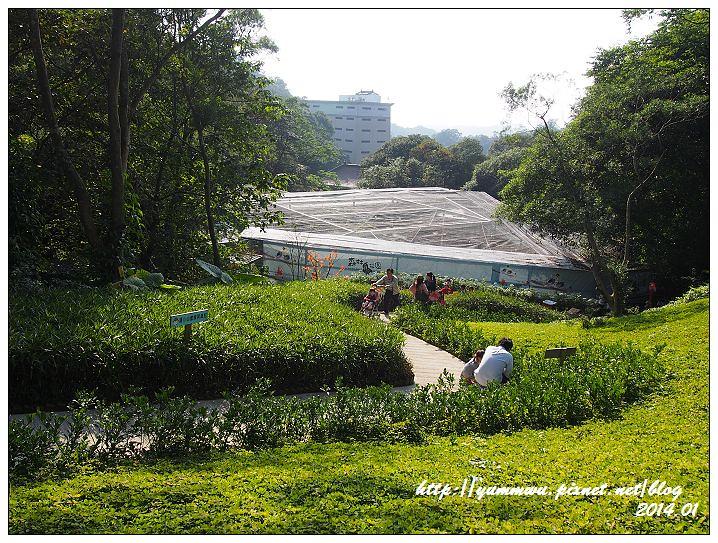 森林鳥花園54