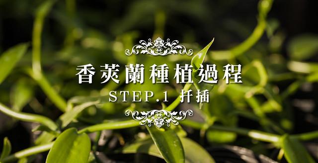 【香草莢種植】如何種植香莢蘭?STEP1.扦插香草莢苗
