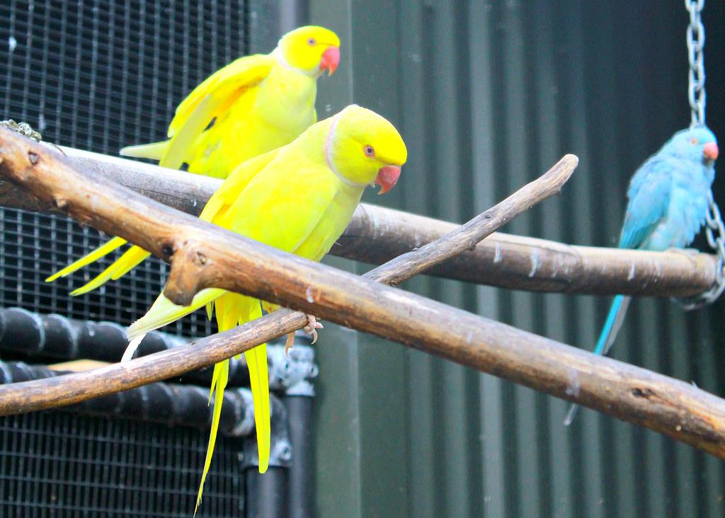 rainbow-springs-birds